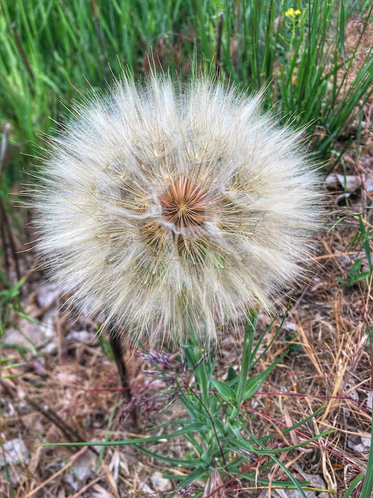 Flower seed head