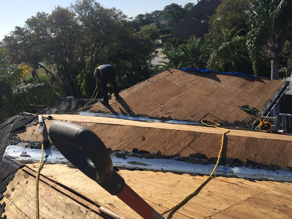 exposed plywood on roof as we replaced the old roofing